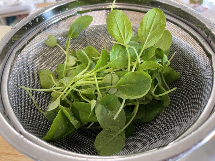 小松菜間引きの収穫の画像