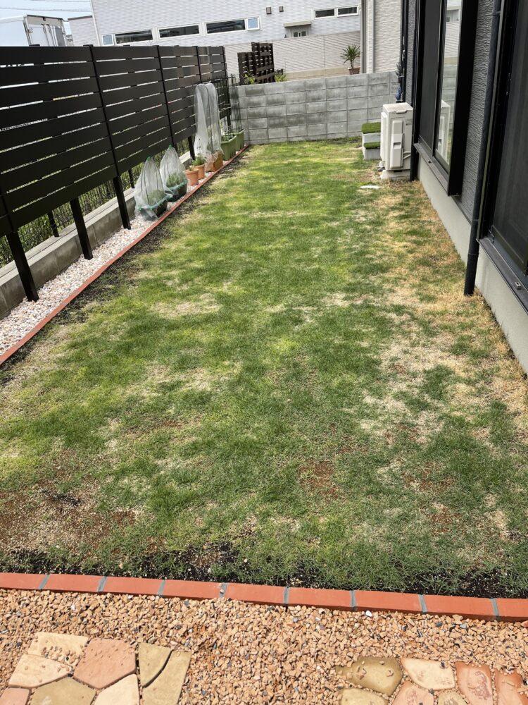芝のアフターの画像