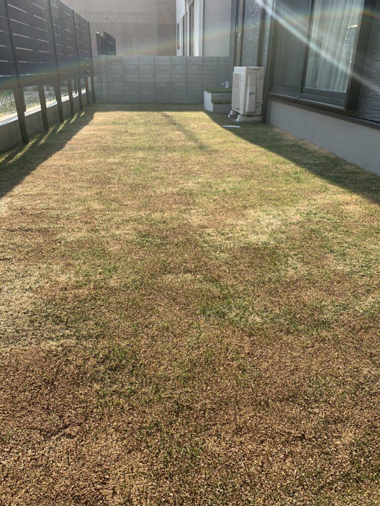 枯れた人工芝の画像